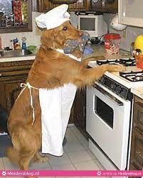 gekke honden - Google zoeken