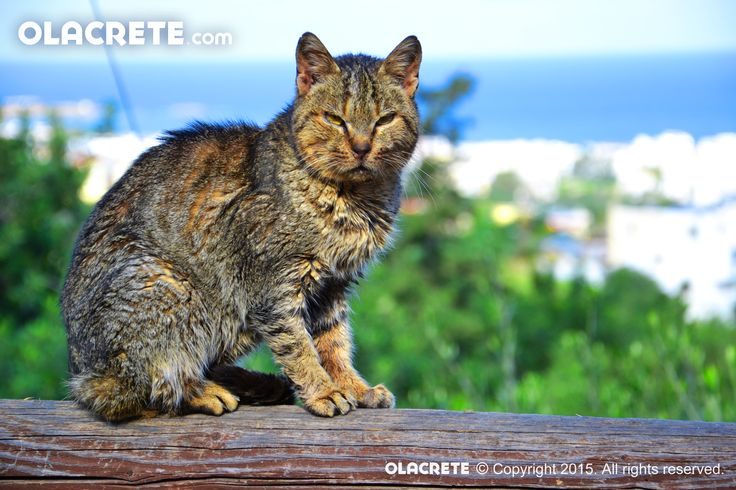 Rabbit Cat - Koutouloufari - Chersonissos
