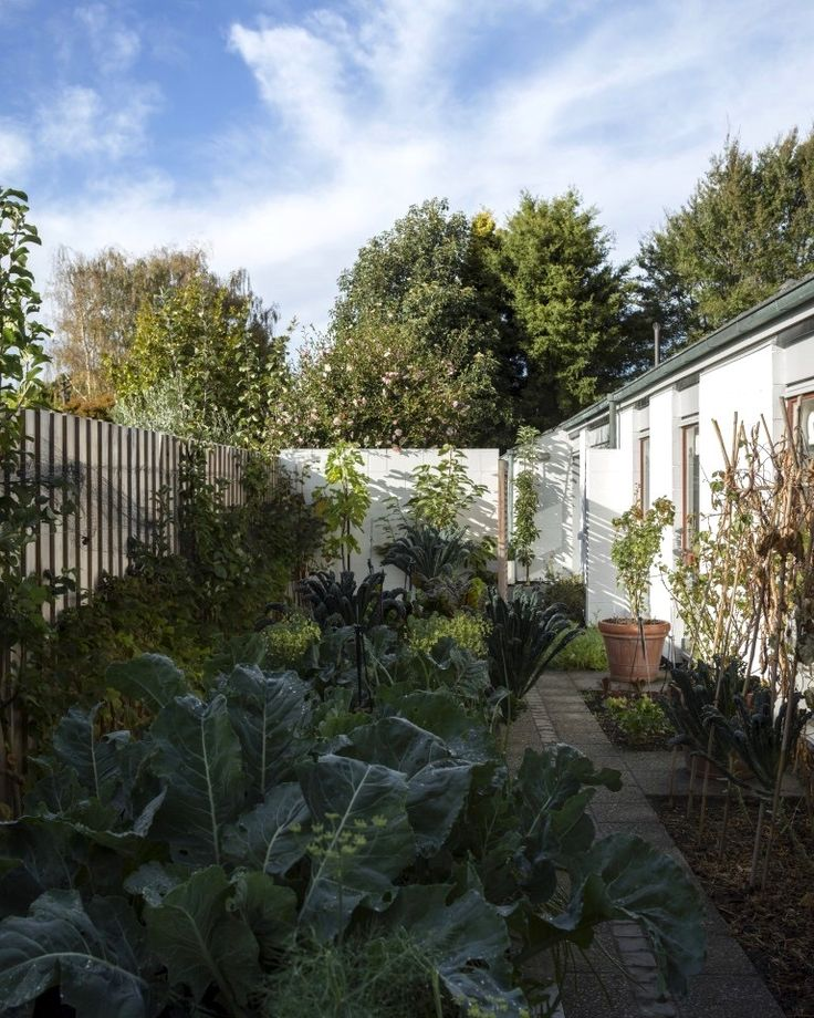 245 best Edible Gardening images on Pinterest Edible garden