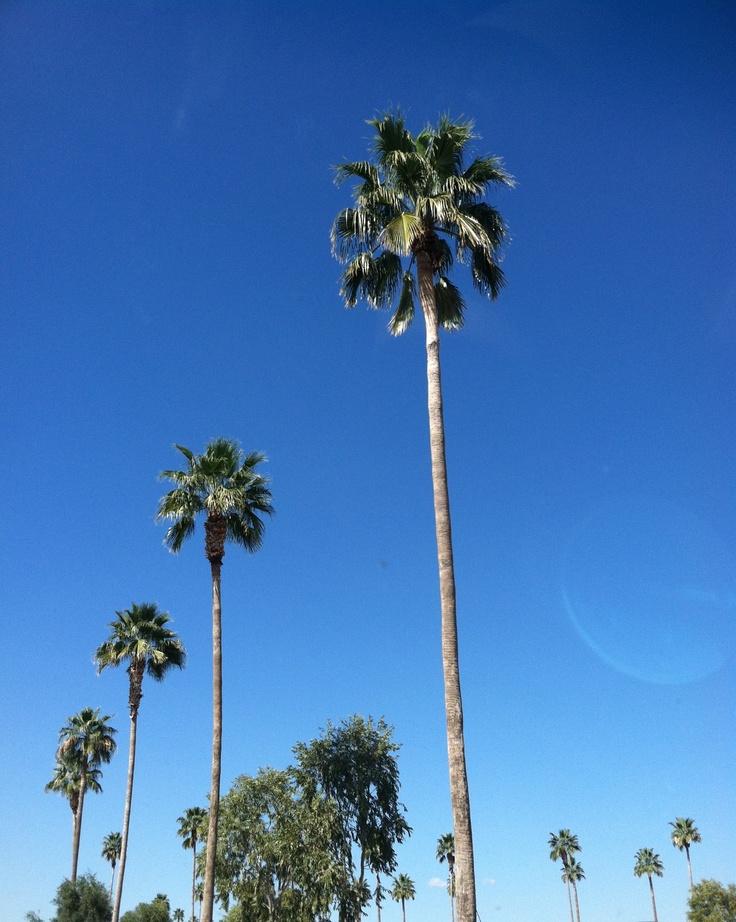 Pheonix Arizona palm trees.   Places I have been ...