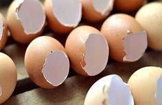 Πετάτε το τσόφλι του αυγού; Μεγάλο ΛΑΘΟΣ! Δείτε τι μπορείτε να κάνετε με αυτό… Όλοι μας πετάμε...