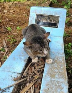 A loving cat was left so heartbroken when her human died that she has spent the last year lying by the woman's grave.