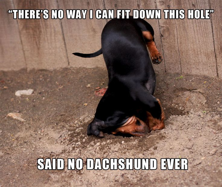 """nike cheer shoes in stores """"Dachshunds were bred to be subterranean!"""""""