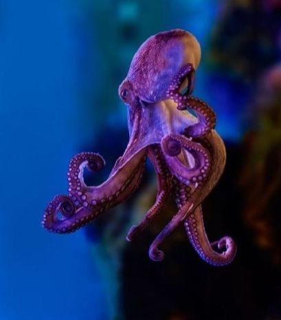 51Octopus Photography