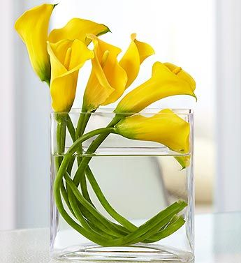 The velvety texture and graceful form of these stunning miniature Calla lilies make an elegant surprise for any reason. Stylish yellow blooms are gathered in a truly original arrangement that's meticulously crafted by our expert floral designers on a flowing angle inside a modern rectangular glass vase. A living sculpture and utterly unforgettable gift that requires a florist's touch.