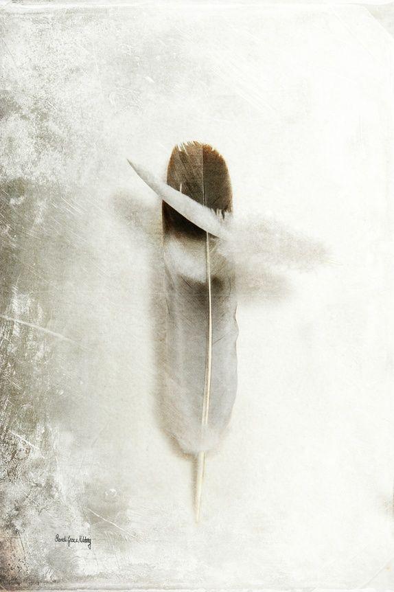 Flying Feathers - Flyvende fjær - Fotokunst