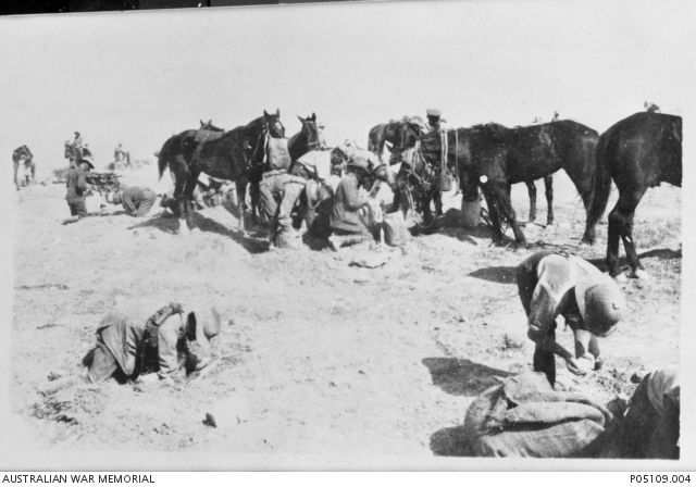 Lighthorsemen of the 3rd Australian Light Horse set out provisions of grain for their horses at a camp near Beersheba. Horses in the background eat from nose bags or wait patiently for their ration.Ottoman Empire: Palestine, Beersheba, c1917...