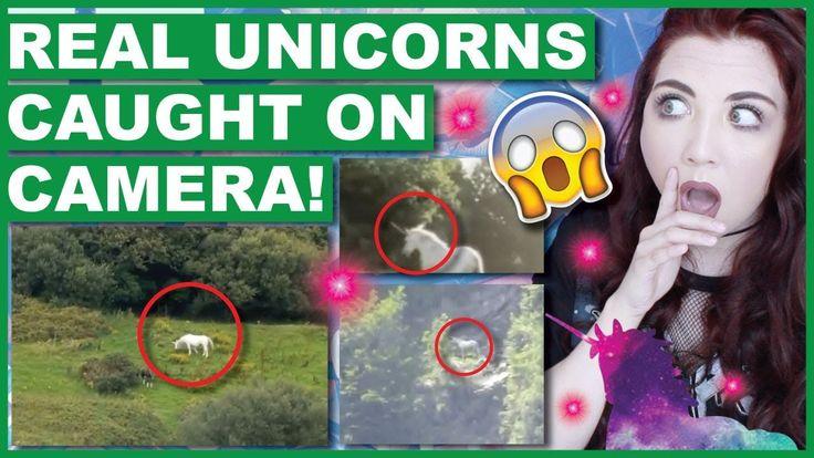 Real Unicorns Caught On Camera Real Unicorn Youtube Blog