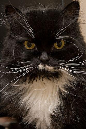 Grumpy Kitty   Flickr - Photo Sharing!