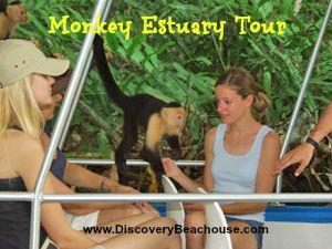 Monkey Estuary Tour - See Costa Rica's wildlife up close! www.DiscoveryBeachouse.com