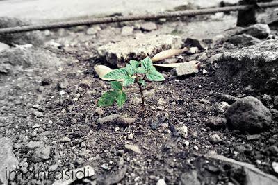 New life ~ Fotografi