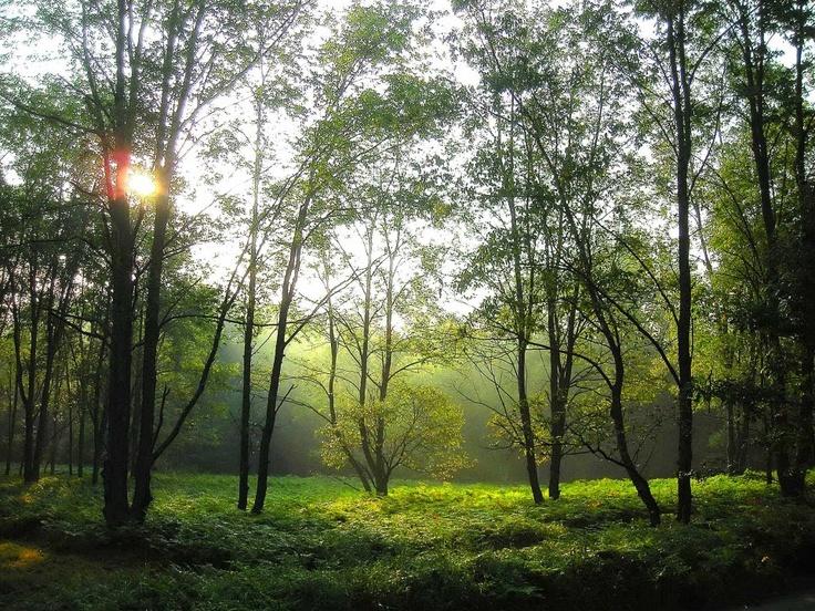 Morning Ferns