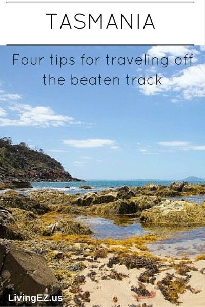Finding local gems and avoiding the tourist traps in Tasmania