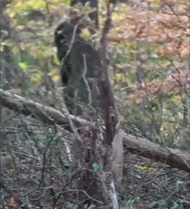 New! Family Accidentally Captures Bigfoot on Video
