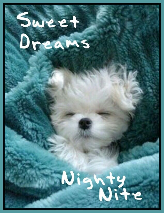 Good Night Quotes With Dogs | www.pixshark.com - Images ...