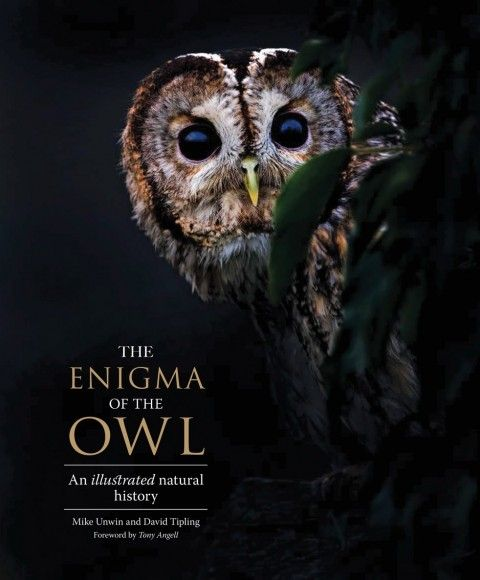 Owls are natural-born killers. So why do we adore them so much? - The Washington Post