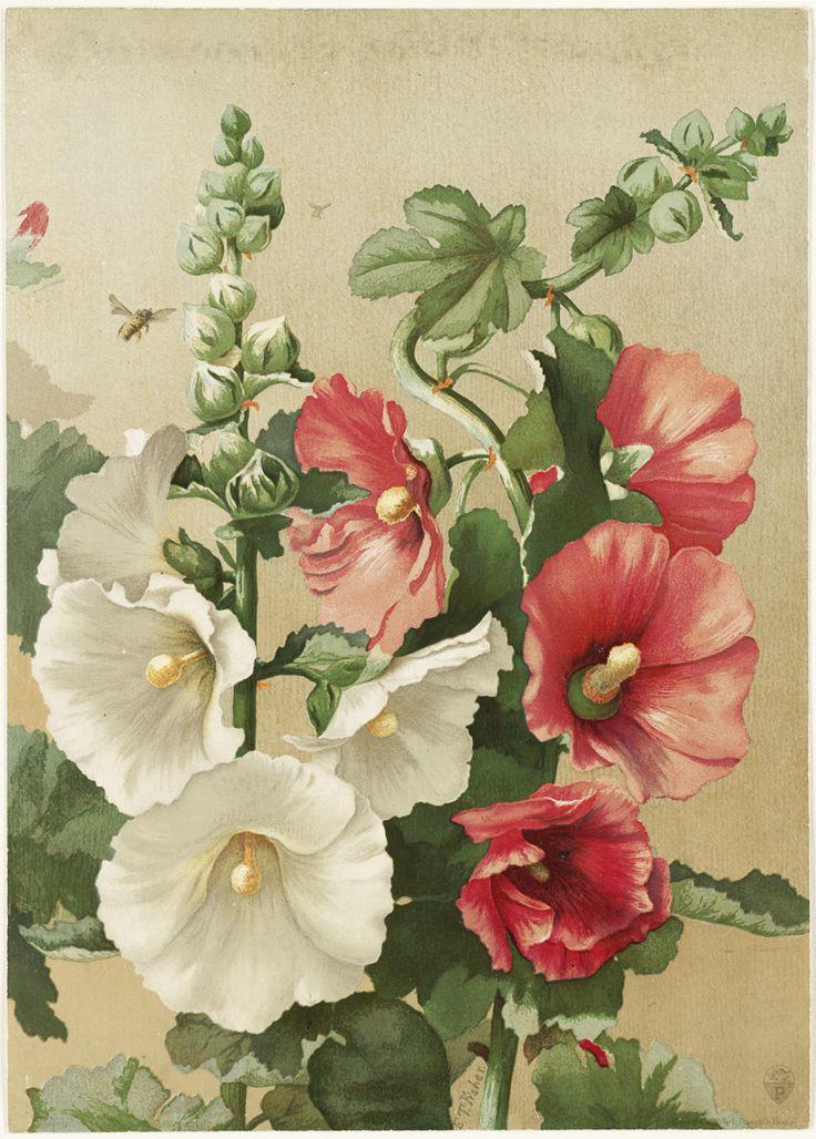 Открытка с семенами цветов, марту легкий