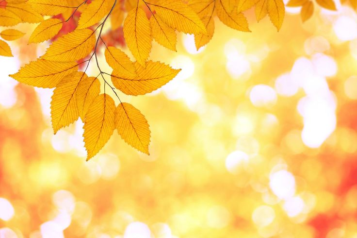 Fall colours are so inspiring!
