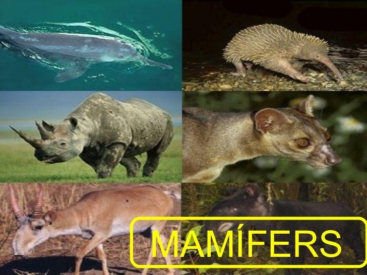 Els Animals Vertebrats Stuffed Animals Vertebrados Medio Ambiente