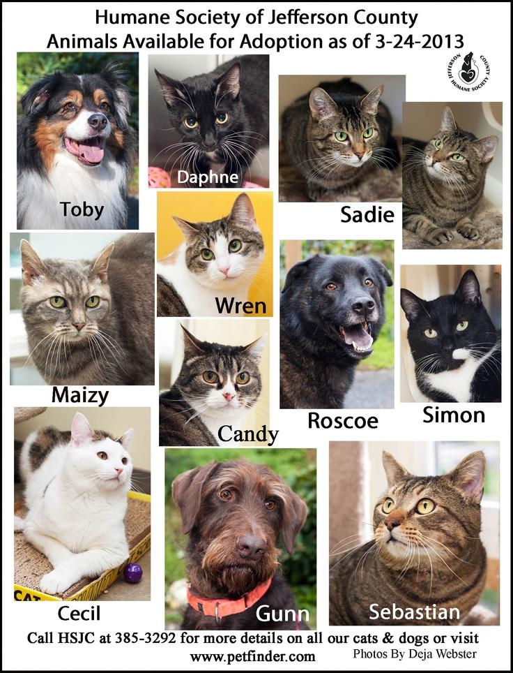 3 24 Humane Society Of Jefferson County Adoption Poster Humane Society Animals Jefferson County