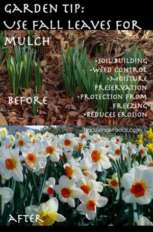 Garden Mulch @ Traditional-Foods.com
