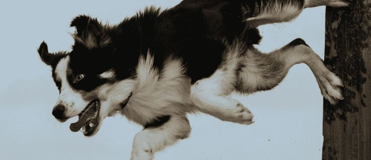 Alleviate #dog muscle sprains, strains, soreness and fatigue with ACV