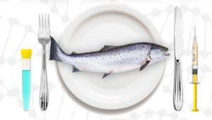 Genetically engineered salmon, the first approved GE animal, could be on its way to your plate. But we're already paying for it...