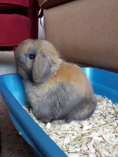 litter box training allows bunnies to be free. He enjoys quality time with the family. also it makes it a lot easier to clean their cage! & 20 best Rabbits! images on Pinterest | Rabbits Bunnies and House ... Aboutintivar.Com