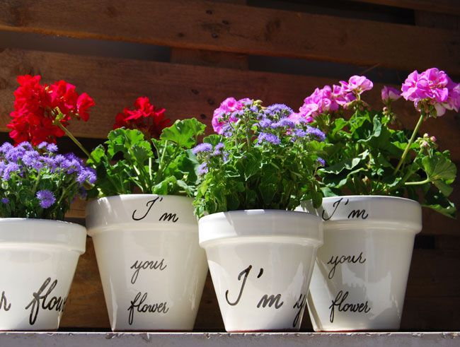 Flower pots & calligraphy | Vasi & calligrafia | By Marika Salerno