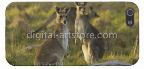 iPhone covers, wildlife photography Eastern Grey Kangaroo, - Artstore $55 inc delivery