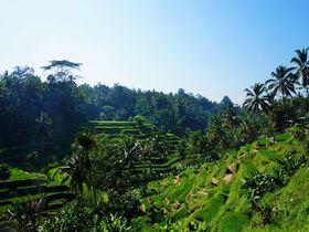バリ島はビーチやマッサージだけじゃないおすすめは棚田サイクリングインドネシアトラベルjp 旅行ガイド