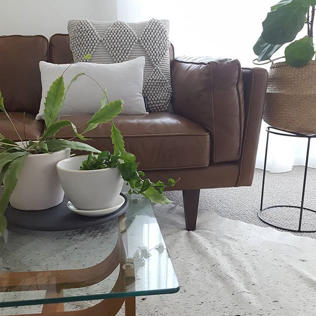 School holidays have arrived so I have rewarded myself with a new plant baby and a bottle of wine, this is where I will be in half an hour after I put the kids to bed! . . . . #melbourne #interiordesign #interiors #interiorstyling #midcenturymodern #midcentury #plantgang #plantsofinstagram #plantstagram #plantstyling #fiddleleaffig #indianrope #hoya
