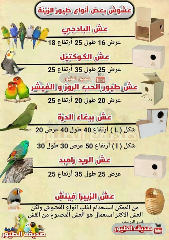 Pin By Oussama Benslimane On Nids D Oiseaux Job