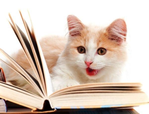 15 tipos de leitores representados por cães e gatos | ROCK'N TECH