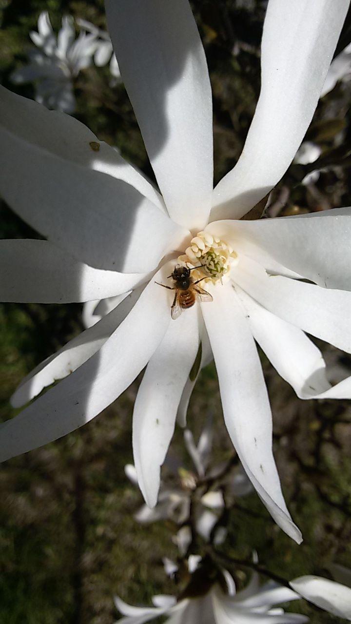 #ecofriendly #nice #best #inspirational #instadaily #garden #bee #magnolias #naturativ #ecology