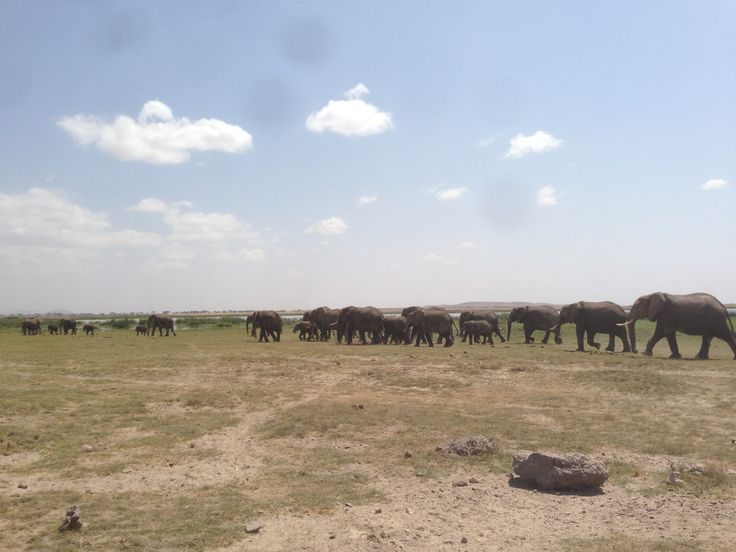 암보셀리 공원, 일렬로 몰려 가는 코끼리 떼