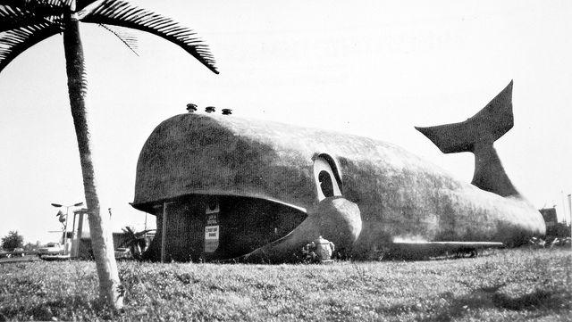 Willy The Whale Car Washes Tonawanda And Niagara Falls