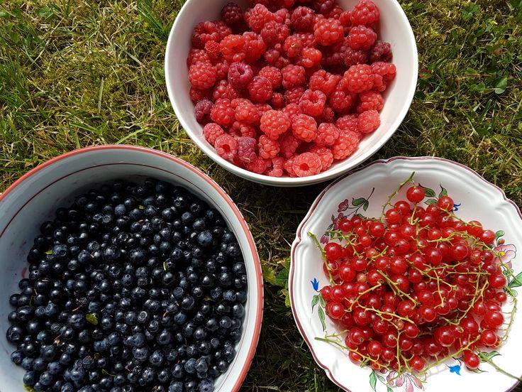 Morning harvest. Thank you Norwegian summer.