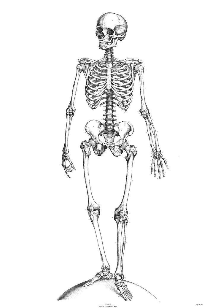 14 idéal coloriage squelette photos  dessin squelette