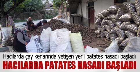 HACILARDA PATATES HASADI BAŞLADI  http://www.cubukpost.com/cubukta_patates_hasadi_basladi_haber3953.html