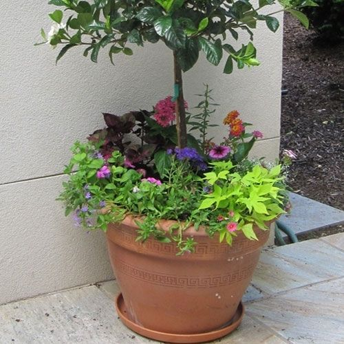 Decorative Italian Flower Pot | Italian Garden Planter | Real Terracotta  Clay