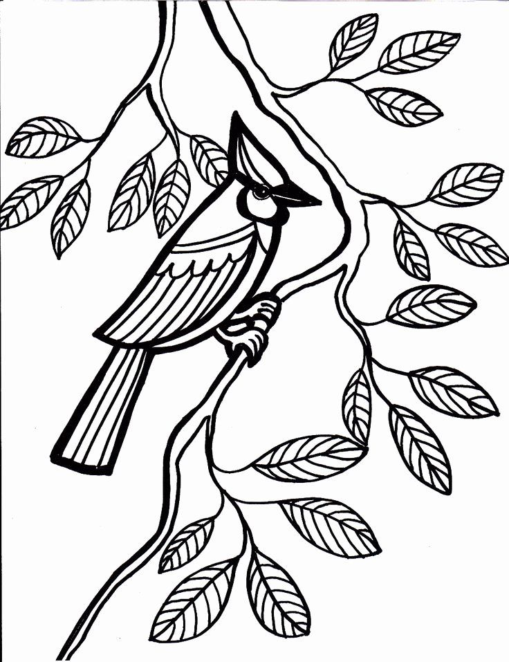 Coloring Books For Seniors New 60 Best Simple Colouring Pages Images On Pinterest Bird Coloring Pages Animal Coloring Pages Easy Coloring Pages