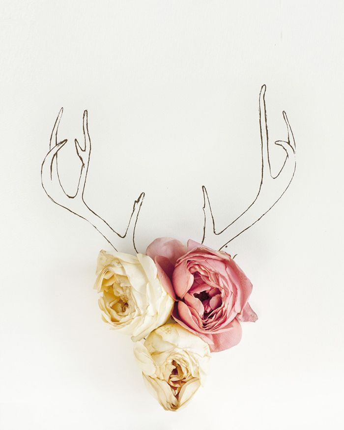 7 best Geweih images on Pinterest Deer, Deer antlers and Horns