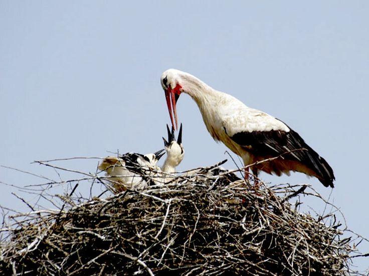Telineelapuram and Telukunchi Bird Sanctuaries in India