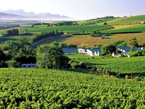 Wine farm, Durbanville -- South Africa