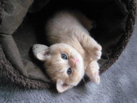 sweet kitten...