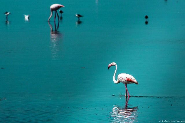 The 'Big Five' of the Camargue