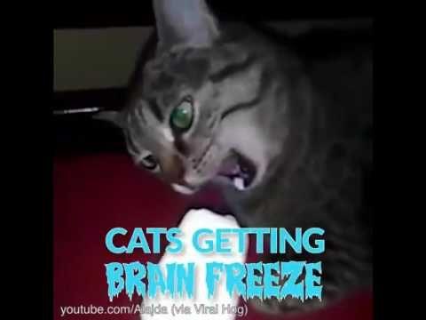 Cat brain freeze - YouTube..lol I found it!!!