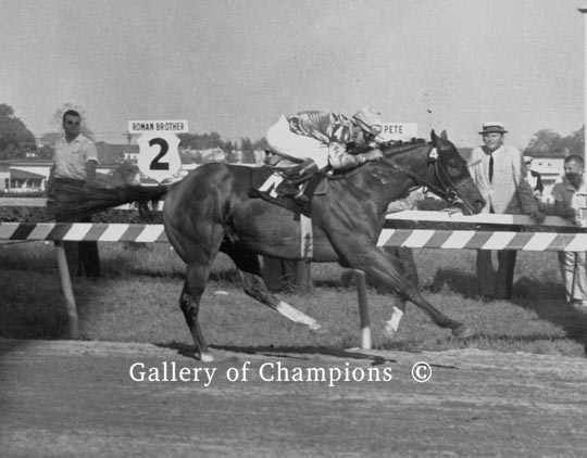 Northern Dancer follows up his Kentucky Derby victory by winning the 1964 Preakness Stakes at Pimlico Race Course by 2 and 1/4 lengths. He would be beaten in the Belmont Stakes by Quadrangle before winning the Queens Plate in Canada. He was then retired from horse racing and went on to a fabulously successful career as a horse racing stallion in the breeding shed.