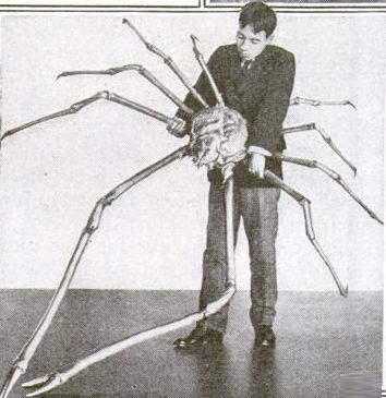 Japanese spider crab - Japanese spider crab - Wikipedia